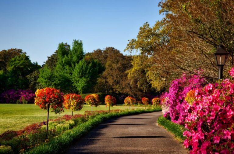 The Most Colorful Trees to Plant for a Beautiful Autumn Yard