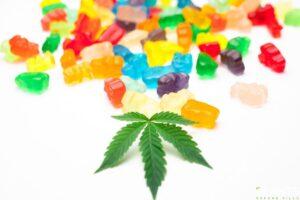 CBD Gummies More Popular Than Hemp Gummies, Here's The Differences
